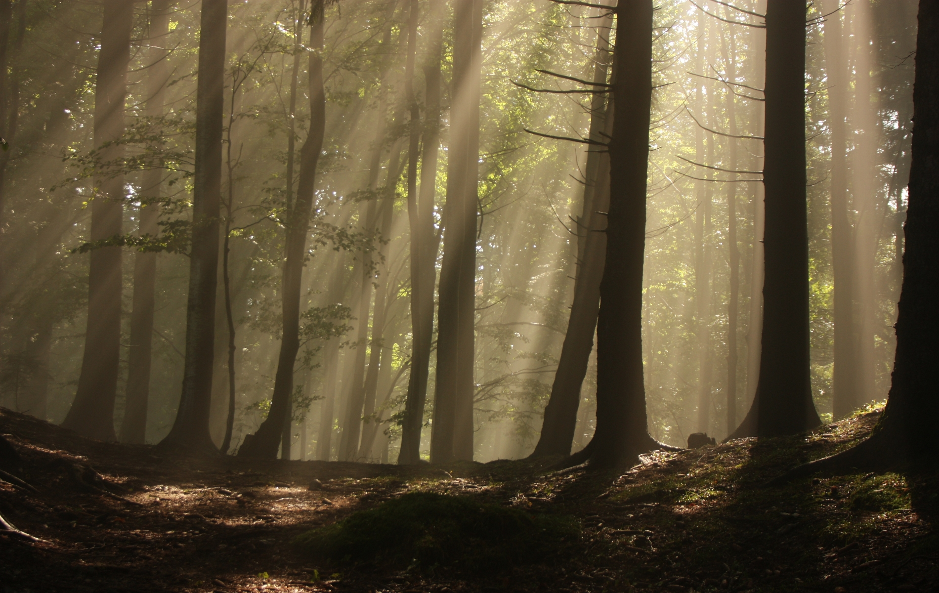 File:Nicubunu-f14-backgrounds-submission-Magic-forest.jpg