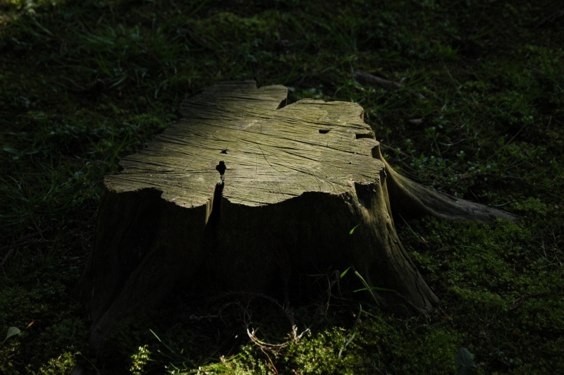 File:Stump.jpg